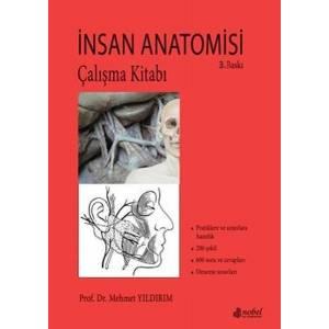 İnsan Anatomisi Çalışma Kitabı