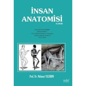 İnsan Anatomisi